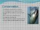 The Bluefin Tuna