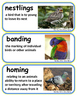 ReadyGen The Boy Who Drew Birds Vocabulary Word Wall Cards