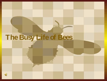 The Busy Life of Bees