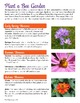 The Buzz About Honeybees | Bee Biology Science NGSS & Lite