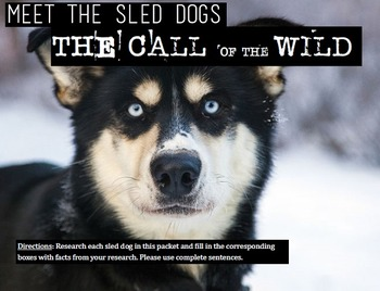 The Call of the Wild: Meet the Real Sled Dogs