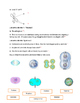 The Cell Cycle and Mitosis PPT Worksheet with KEY