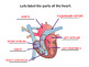 The Circulatory System SMART notebook presentation