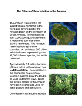 The Effects of the Destruction of the Rainforest