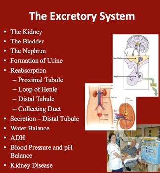 The Excretory System - Maintaining Water Balance - Senior