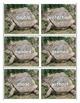 The Foolish Tortoise - Eric Carle/Richard Buckley - Book S