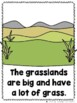 The Grassland Bundle  (2 Sight Word Books and 2 Colored Te