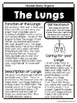 The Human Body- Organs
