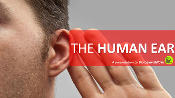 The Human Ear Powerpoint Presentation