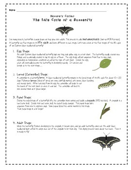 The Life Cycle of a Butterfly - Life Cycle Practice - Life
