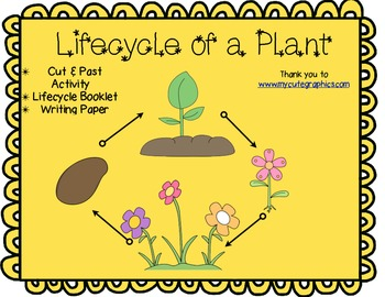 The Lifecycle of a Plant