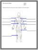 The Muscular System SMART notebook presentation