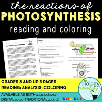 Photosynthesis: The Reactions of Photosynthesis