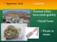 The Rock cycle and Three Types of Rocks Powerpoint SIOP style