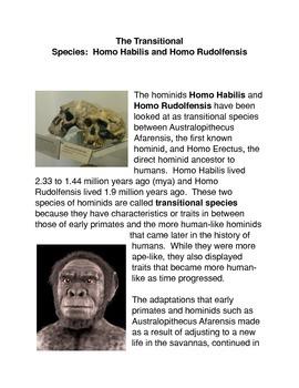 The Transitional Species: Homo Habilis and Homo Rudolfensis