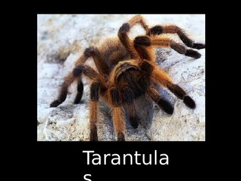 The Truth About Tarantulas:  Facts and Photos