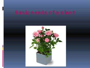 The basic needs of a plant