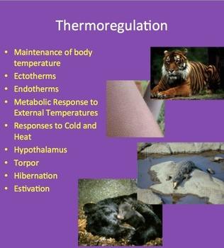 Thermoregulation - Maintenance of Internal Body Temperatur