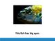 This Fish beginning text reader