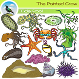 Tide Pool Clip Art - Sea Creatures -  Invertebrates