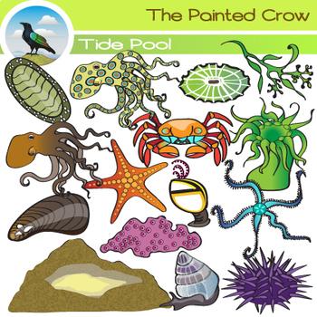 Tide Pool Clip Art - Sea Creatures -  Invertebrates
