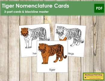 Tiger Nomenclature Cards