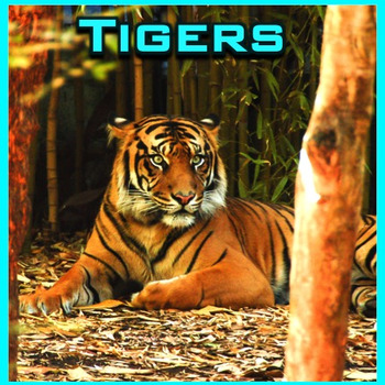Tigers - PowerPoint & Activities