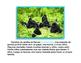 Todo sobre gorilas libro de non-ficcion All About Gorillas