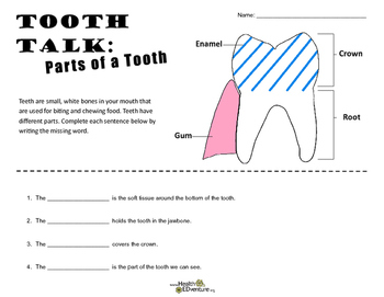 Tooth Talk: Parts of a Tooth