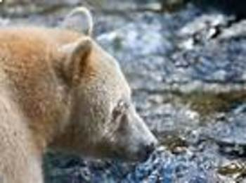 Touching Spirit Bear Chapter 1 and 2 Crossword Puzzle