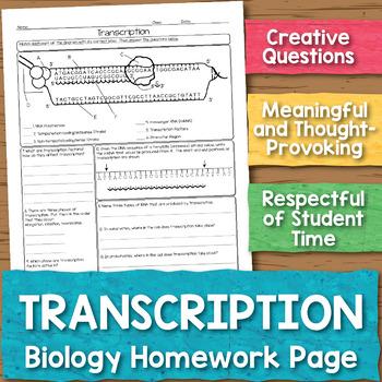 Transcription Biology Homework Worksheet