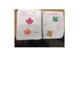 Transformations Interactive Notebook (Fall Themed).