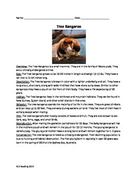 Tree Kangaroo - Article Information Facts - Questions Voca