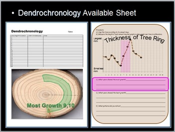 Tree Ring Dating Lesson, Dendrochronology, Plant Vascular System