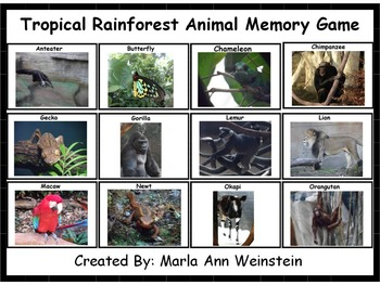 Tropic Rainforest Animal Memory Game
