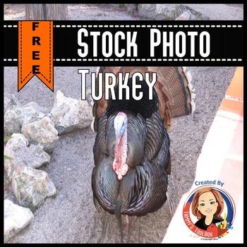 Turkey Stock Photo Freebie