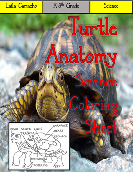 Turtle Anatomy Craft