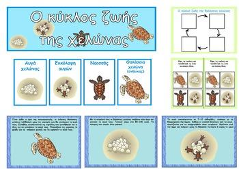 Turtle Life Cycle Posters (Greek)