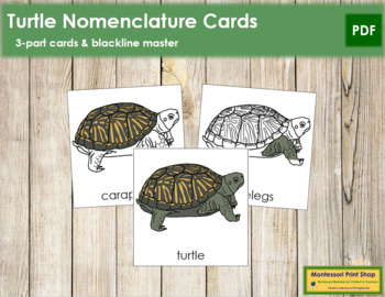 Turtle Nomenclature Cards