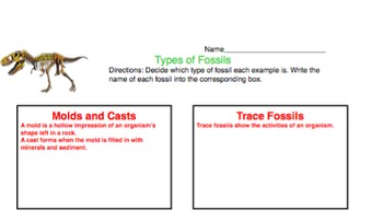 Types Of Fossils Sort