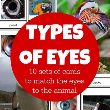 Types of Eyes Montessori Cards