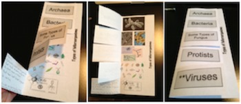Types of Microorganisms Interactive Foldable