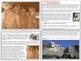 Mount Rushmore - Unit
