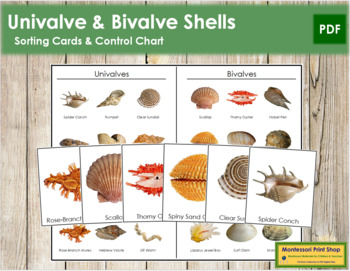 Univalve and Bivalve Shells: 3-Part Cards