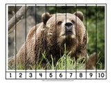 Updated Bear Number Order and Skip Counting Puzzles