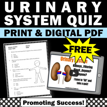 urinary system for kids free