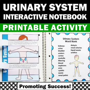 urinary body system activities 5th 6th grade