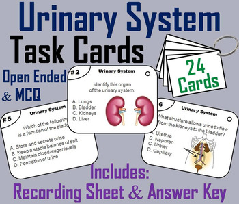 Urinary System Task Cards