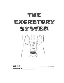 Urinary/Excretory System Packet/Work