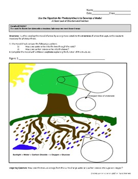 Use the Equation for Photosynthesis to Develop a Model